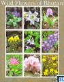 Bhutan Stamps - 2014 Wild Flowers