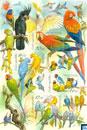 Czech Republic Stamps - Animal Breeding: Parrots