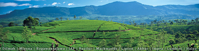 BUY - Sri Lanka Tea