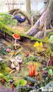 Taiwan Stamps - Mushrooms
